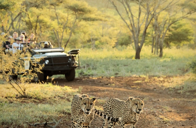 Thanda Game Lodge - Hluhluwe - Safari