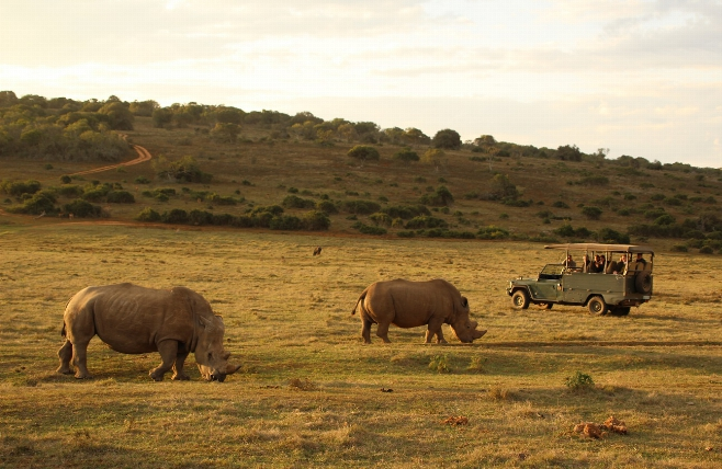 Addo Elephant National Park - Scottia Private Game Reserve - Game Drive - Neushoorns