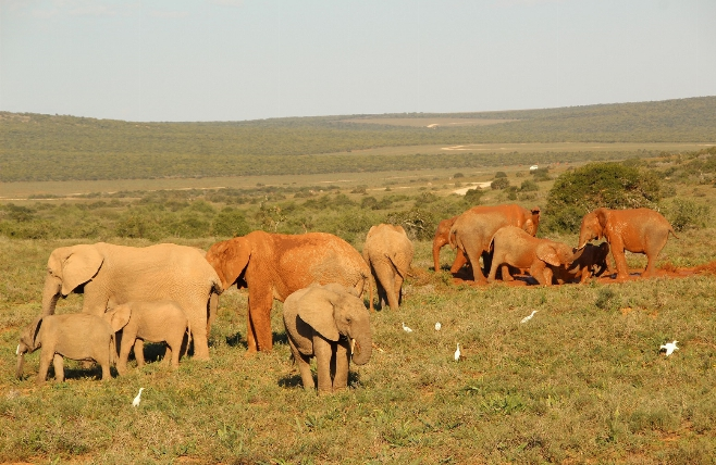Addo Elephant National Park - Game Drive